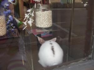 bunny bottom!