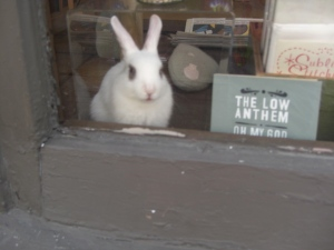 bunny in the window