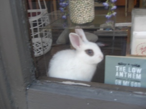 baby blue in the lovinganvil AndMOR window